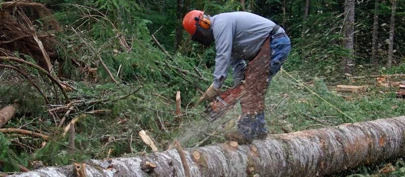 Koliko možete da zaradite kao drvoseča u Srbiji?