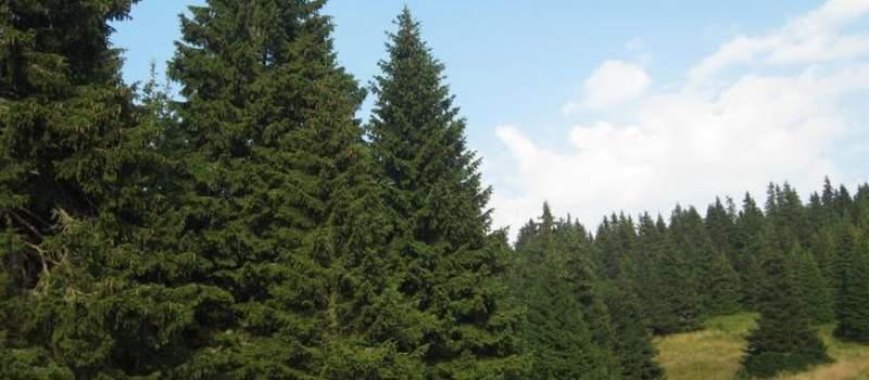 Želite da posadite drvo? Prijavite se do 17. septembra i dobićete besplatne sadnice