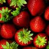 Gajenje jagoda isplativo ako se na vreme obezbedi tržište