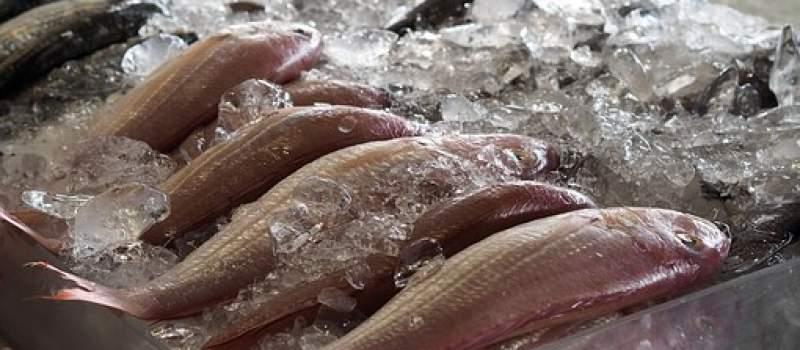 Vanredno stanje zadaje velike udarce domaćem ribarstvu