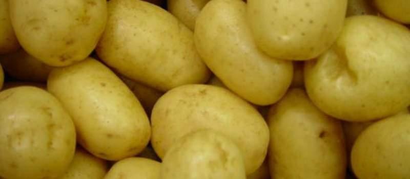 Srbija je prinuđena da uvozi krompir