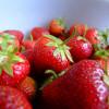 Uzgoj jagoda u zatvorenom prostoru donosi dobru zaradu