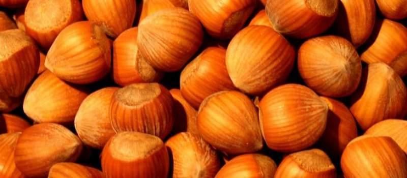 Srbi zasadili ovu voćku, a sad zarađuju do 20.000 EVRA