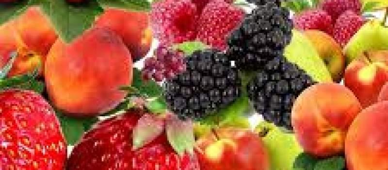 Izvoz srpskog voća u Belorusiju dobar za izvozni saldo