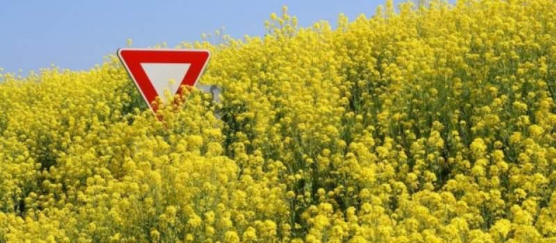 Srbija će morati da dozvoli promet GMO hrane?