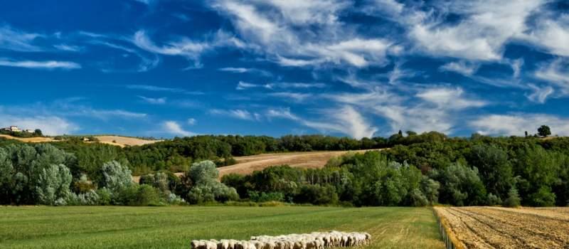 Hrvatska uvozi pastire, masere, instruktore ronjenja