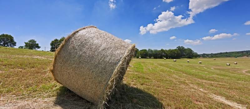 Hektar zemlje u Vojvodini poskupeo na 20.000 evra