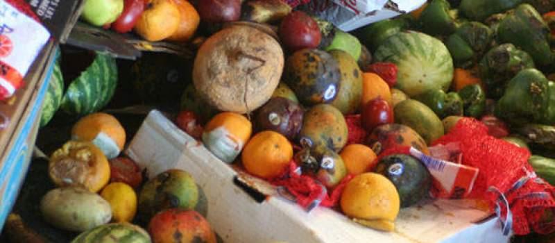Mala ulaganja, a zarada do 12 hiljada dnevno: Kako zaboravljeno voće može da vam donese dobru zaradu