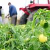Vaučeri regulišu staž sezonskim radnicima