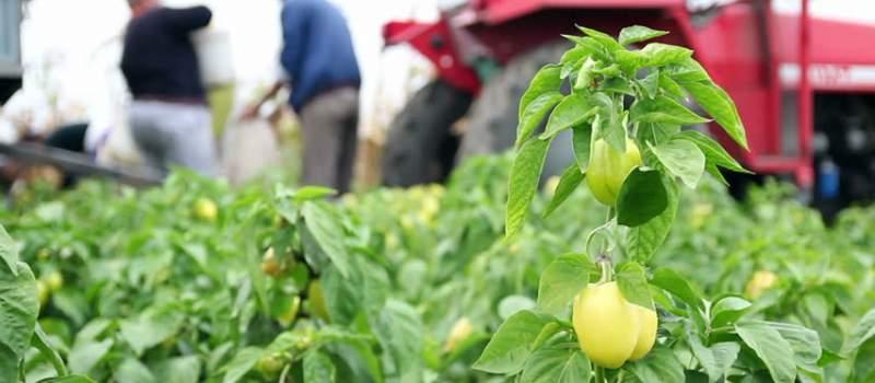 Država daje 50.000 evra da započnete biznis na selu