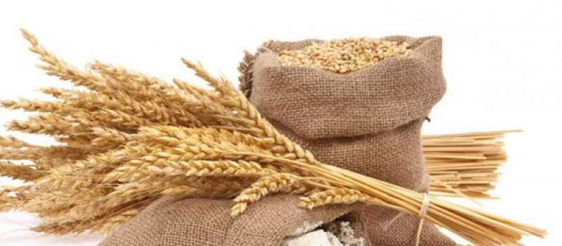 Cene pšenice i kukuruza pale, promet niži 28 odsto