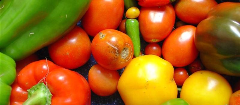 Kako do investitora za proizvodnju visokokvalitetne hrane u Srbiji?