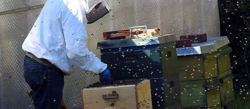 Danas je svetski dan pčela, a iskusni pčelari savetuju kako da započnete ovaj biznis u Srbiji